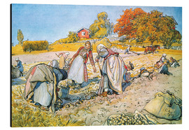Aluminium print  Digging for potatoes - Carl Larsson