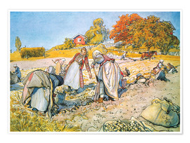 Premium poster  Digging potatoes - Carl Larsson