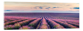 Acrylic glass  Lavender field in Provence - Matteo Colombo