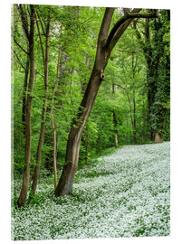 Acrylic print  Forest during Spring with everything covered by Wild Garlic - Andreas Wonisch