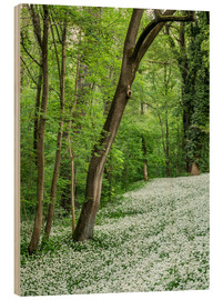 Wood print  Forest during Spring with everything covered by Wild Garlic - Andreas Wonisch