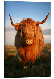 Canvas  Highland Coo - Martina Cross