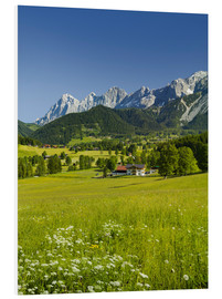 Foam board print  Alpine Meadow - Rainer Mirau