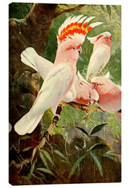 Canvas print  Leadbeater's Cockatoo - Wilhelm Kuhnert