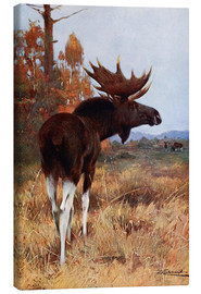 Canvas print  Elk or Moose - Wilhelm Kuhnert