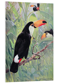 Foam board print  Great Toucan - Wilhelm Kuhnert