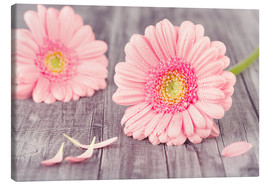 Canvas  Gerbera flower bloom - pixelliebe