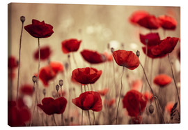 Canvas  Poppy Meadow - Nailia Schwarz