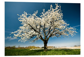 Foam board print  Single blossoming tree in spring - Peter Wey