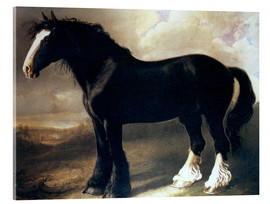 Acrylic print  The old English horse - William Shiels