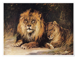 Poster  Lions