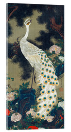 Acrylic print  A white peacock under a pine tree - Itô Jakuchu