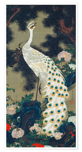Premium poster A white peacock under a pine tree