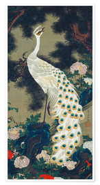 Premium poster  A white peacock under a pine tree - Itô Jakuchu