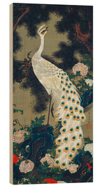 Wood print  A white peacock under a pine tree - Itô Jakuchu