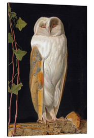 Aluminium print  The White Owl - William James Webbe
