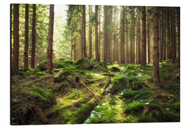 Aluminium print  Spring awakening in the forest - Oliver Henze