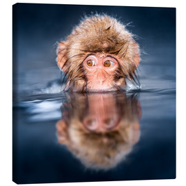Canvas print  Japanese Snow monkey bathing - Jan Christopher Becke