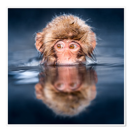 Premium poster  Japanese Snow monkey bathing - Jan Christopher Becke