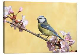 Canvas print  Blue tit on a branch of cherry - Uwe Fuchs
