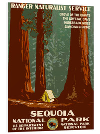 Foam board print  Sequoia National Park - Travel Collection