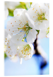 Acrylic print  spring bloom - Jens Berger