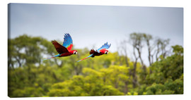 Canvas  Red-and-green-macaws flying home - Alex Saberi