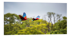 Forex  Red-and-green-macaws flying home - Alex Saberi
