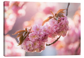 Canvas print  Japanese cherryblossom in LOVE 3 - UtArt