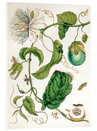 Acrylic print  Passion flower and insects - Maria Sibylla Merian