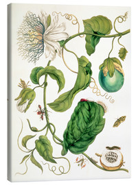 Canvas  Passion flower and insects - Maria Sibylla Merian