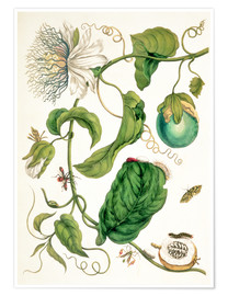 Premium poster  Passion flower and insects - Maria Sibylla Merian