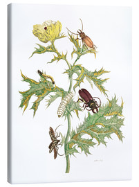 Canvas  Mexican Prickly Poppy and longhorn beetles - Maria Sibylla Merian