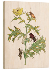 Wood print  Mexican Prickly Poppy and longhorn beetles - Maria Sibylla Merian