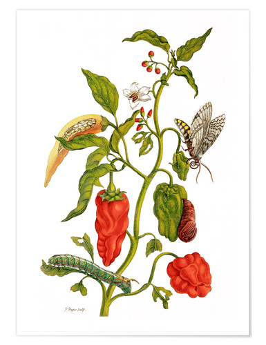 Premium poster Peppers and insects