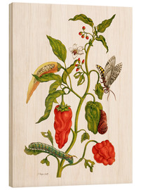 Wood print  Peppers and insects - Maria Sibylla Merian