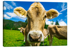 Canvas print  Funny Cow - Michael Helmer