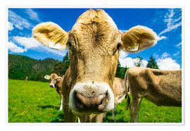 Premium poster  Funny Cow - Michael Helmer