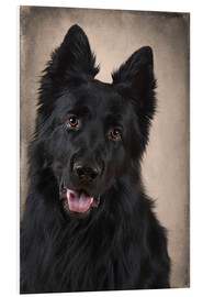 Foam board print  German Shepherd 1 - Heidi Bollich