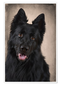 Premium poster German Shepherd 1