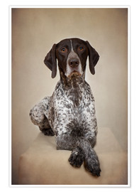 Premium poster German shorthaired pointer / 1