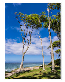 Premium poster Coastal forest on shore of the Baltic Sea