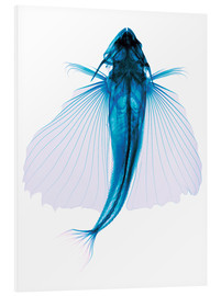 Foam board print  Flying fish, X-ray - D. Roberts