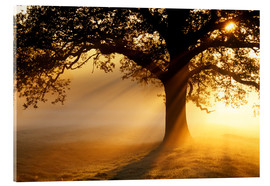 Acrylic print  Oak tree at sunrise - Jeremy Walker