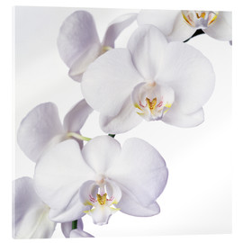 Acrylic glass  Orchid flowers - Johnny Greig