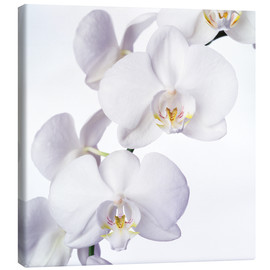 Canvas  Orchid flowers - Johnny Greig