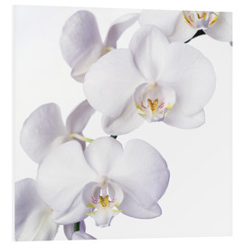 Foam board print  Orchid flowers - Johnny Greig