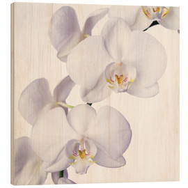 Wood print  Orchid flowers - Johnny Greig
