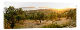 Acrylic print  Olive grove at sunrise - Tony Craddock