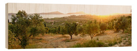 Wood print  Olive grove at sunrise - Tony Craddock